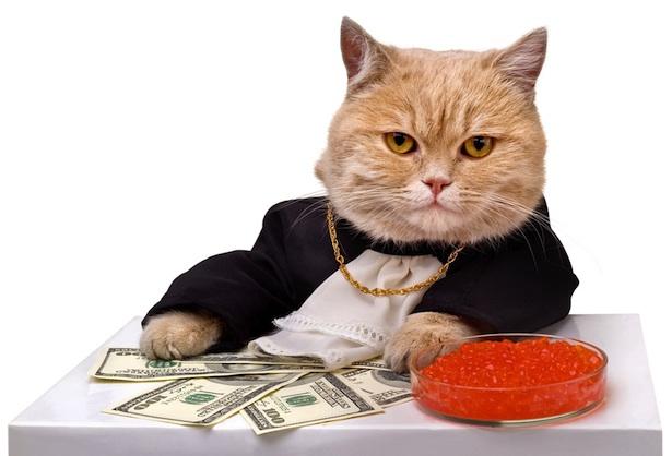 cat_caviar