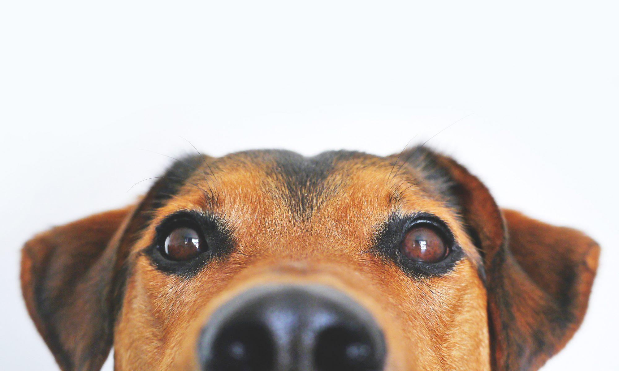 cropped-adorable-animal-blur-406014.jpg